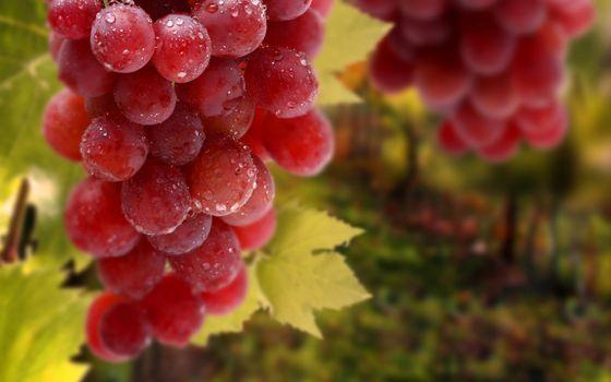 Photo free bunch, drops, fruit