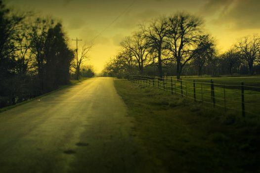 Photo free tree, trees, landscape