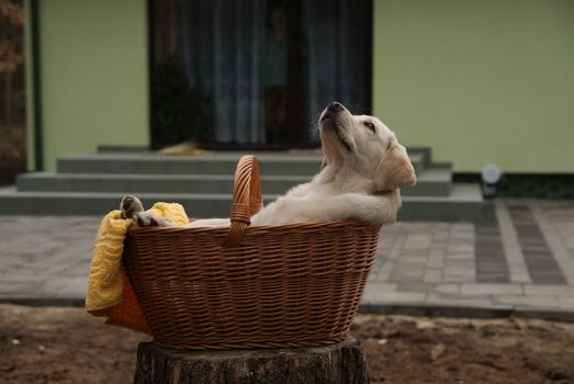 Заставки дерево, щенок, собака