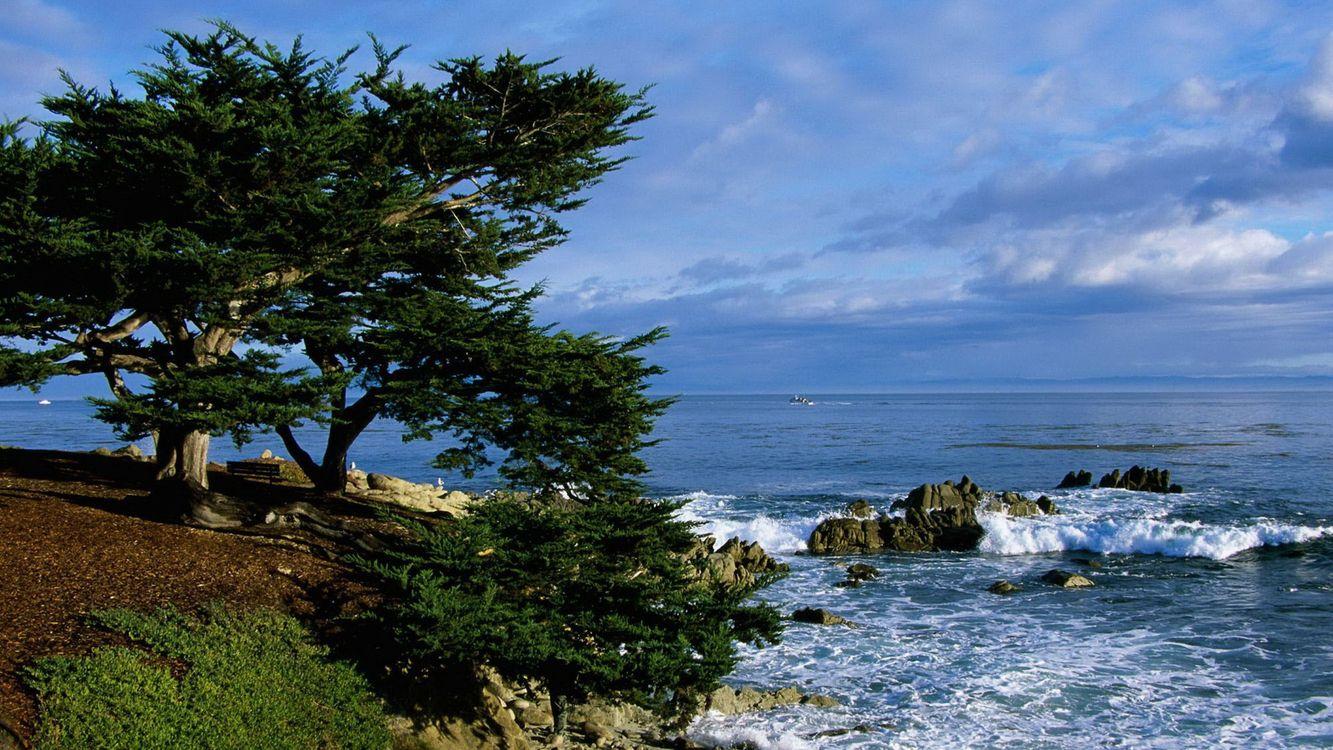 Деревья на берегу моря · бесплатное фото