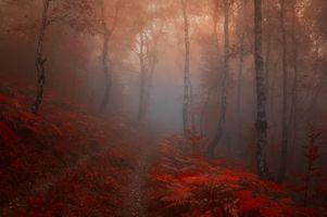 Фото бесплатно туман, осенние листья, природа