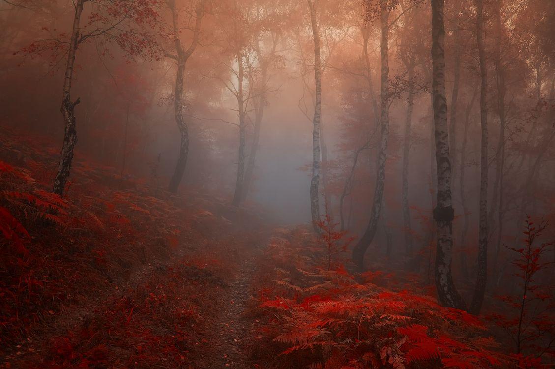 Обои туман, осенние листья, природа картинки на телефон
