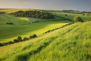 Заставки поля, холмы, трава
