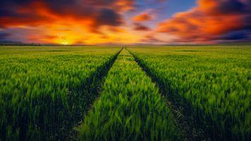 Фото бесплатно сельское хозяйство, зеленое поле, деревня
