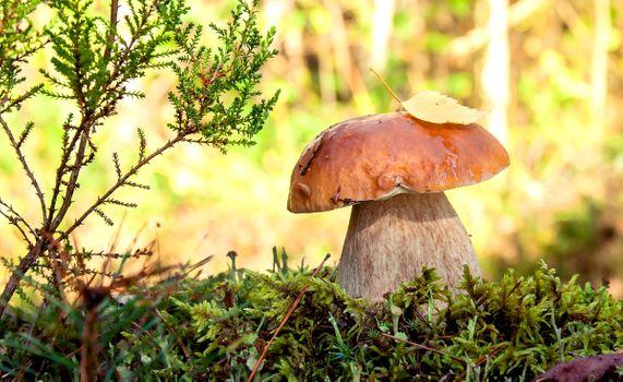 Фото бесплатно Грибы, Мох, Природа