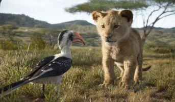 Заставки Король лев, Симба, прогулка, львенок, савана