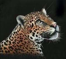 Бесплатные фото леопард,дикая кошка,животное,хищник,морда,взгляд,art