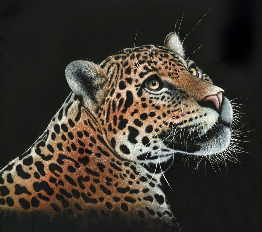 Фото бесплатно леопард, дикая кошка, животное, хищник, морда, взгляд, art, рендеринг