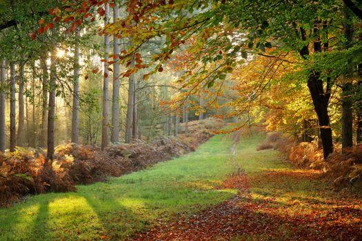 Осенние лучи солнца в парке · бесплатное фото