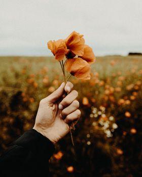 Фото бесплатно цветы, растения, цветочные