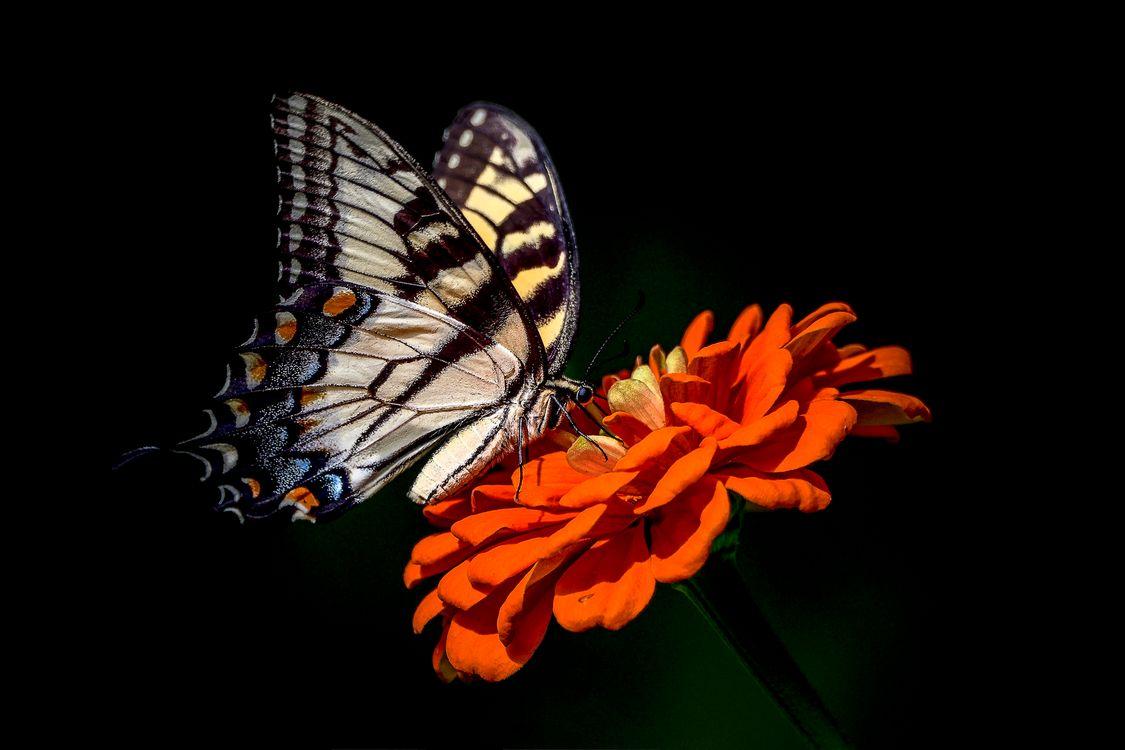 Бабочка на цветке · бесплатная заставка