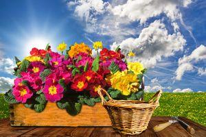 Бесплатные фото цветок,примула,первоцвет,нарцисс,бледно желтый цвет,окно,природа