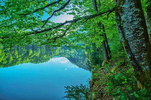 Бесплатные фото озеро,лес,деревья,ветки деревьев,листья,зелёный,природа