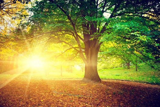 Photo free autumn, rays, leaves