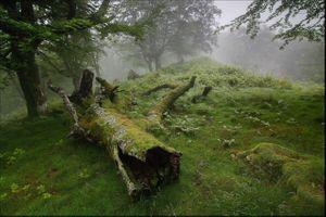 Фото бесплатно лес, все мох, деревья
