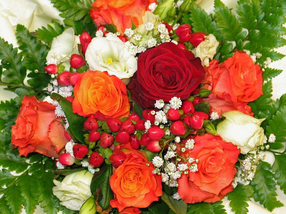 Фото бесплатно цветы, флора, красочные - на рабочий стол