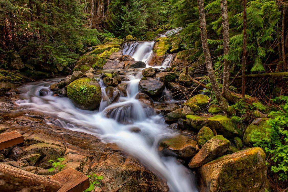 Фото бесплатно лес, река, камни, деревья, природа, пейзаж, пейзажи
