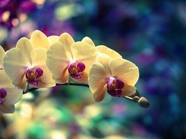 Sprig of orchids · free photo