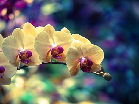 Веточка орхидеи · бесплатное фото