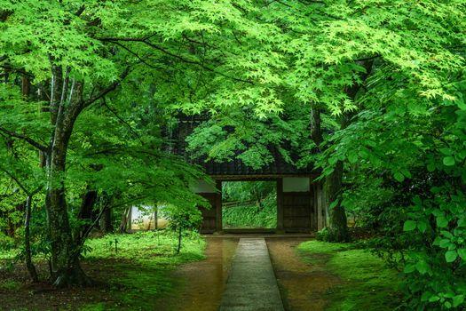 Бесплатные фото парк,лес,деревья,ворота,дорожка,пейзаж