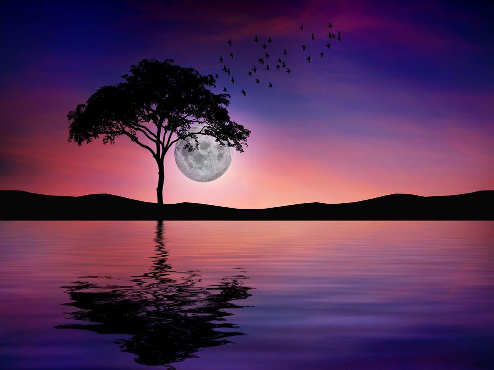 Фото бесплатно ночь, отражение, вода, природа, тьма, полная луна, озеро, одинокое дерево, сумерки, art, рендеринг