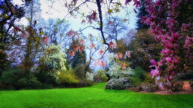 Фото бесплатно Портленд, Орегон, сад, парк, деревья, поле, цветы, цветение, ветки, природа, пейзаж
