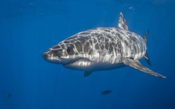 Photo free shark, fishes, underwater