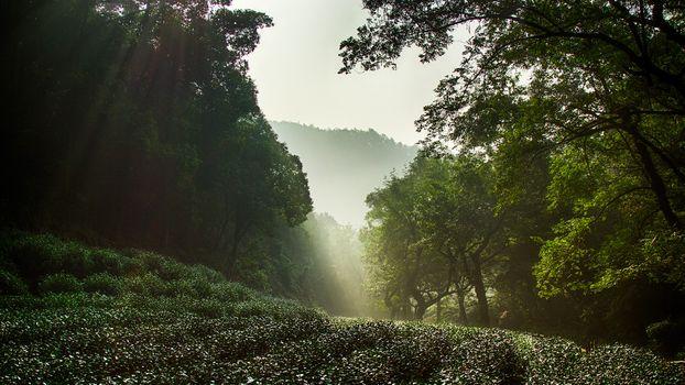 Photo free nature, china, hangzhou