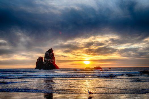 Чайка на берегу моря · бесплатное фото