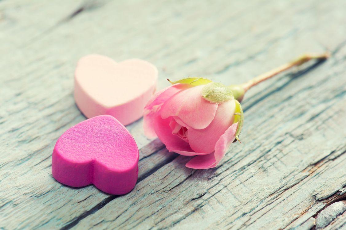 Фото бесплатно любовь, роза, сердечки - на рабочий стол