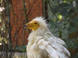 Фото бесплатно птица, большая, стервятник