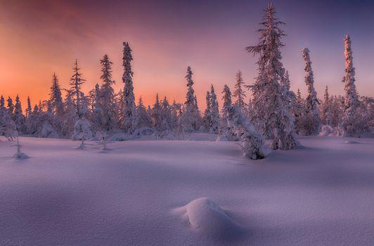 Природная зона тундры · бесплатное фото