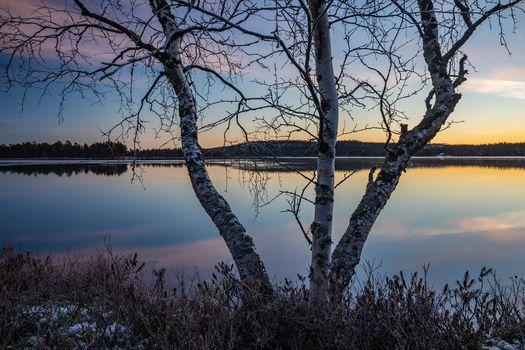Заставки Финляндия, деревья, пейзаж