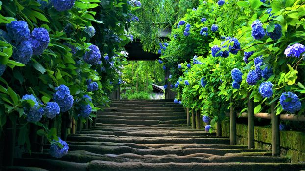 Photo free Flowers, garden, path