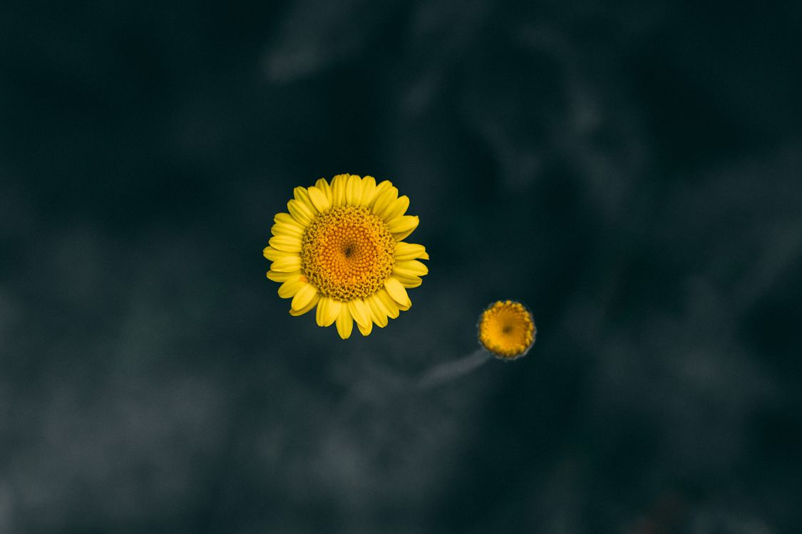 Photos for free intrigued, summer, yellow - to the desktop
