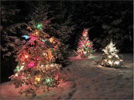 Фото бесплатно ночь, новогодняя ёлка, лес
