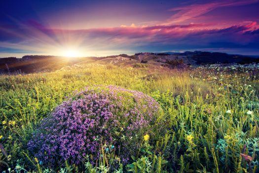 Бесплатные фото рассвет,луг,цветы,облака