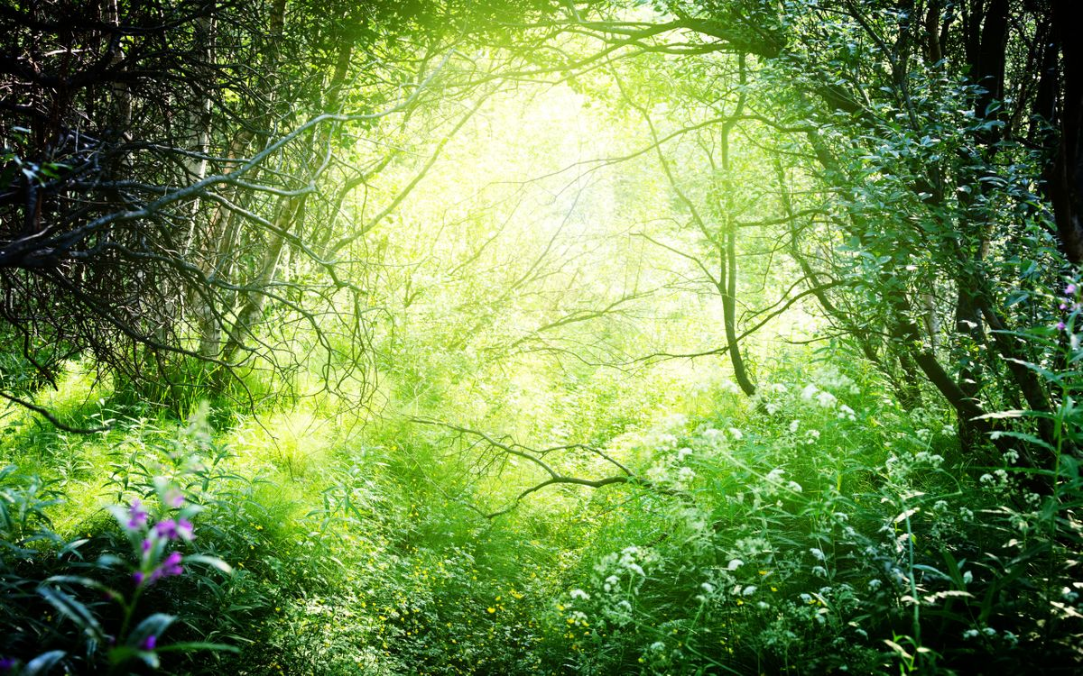 Free photo branches, forest, grass - to desktop