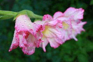 Бесплатные фото цветы,природа,макро,зелень,лето