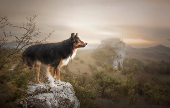 Photo free dog, looking into the distance, landscape