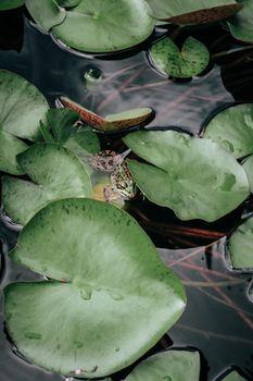 Бесплатные фото лягушка,камыш,лист,зеленый,растение,лето,скрытая,животное
