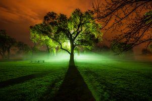 Бесплатные фото ночь,парк,поле,поляна,дерево,свет,иллюминация