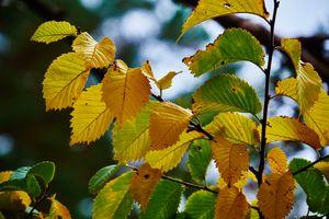 Фото бесплатно осень, ветка дерева, осенние листья