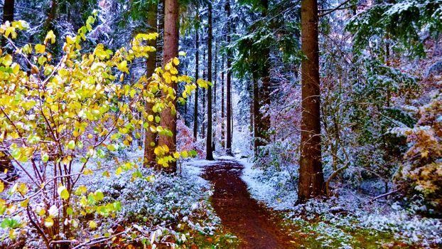 The beginning of winter in the forest - free photo