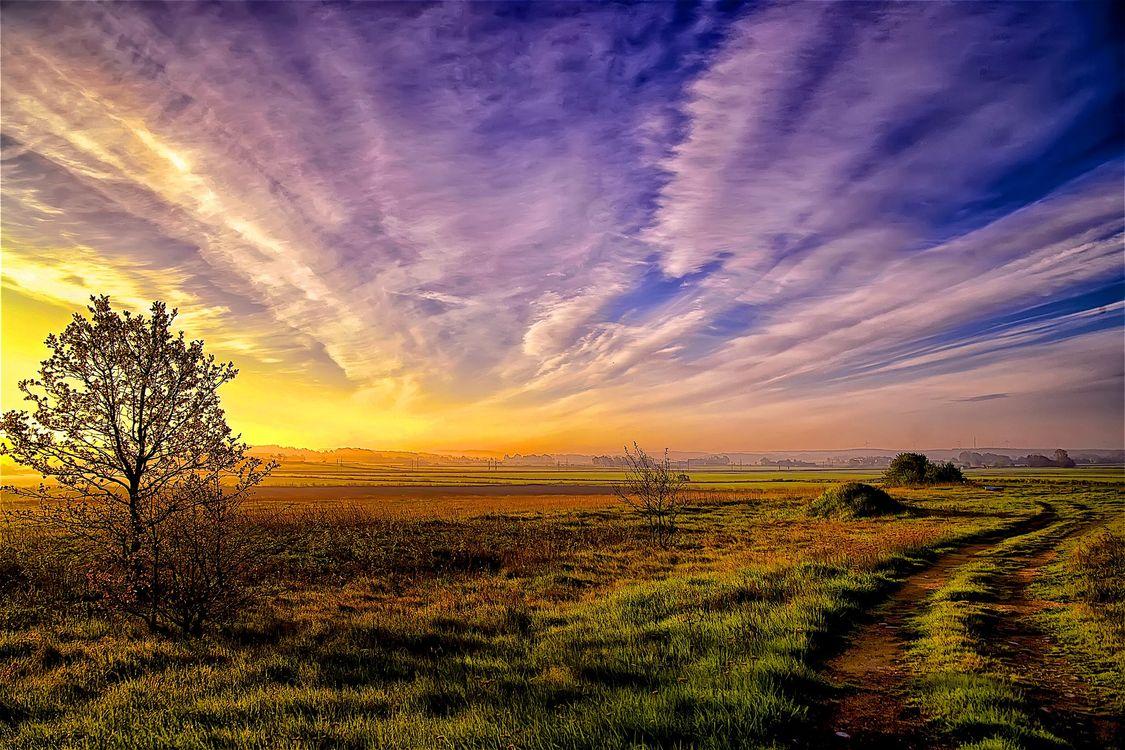 Фото бесплатно закат, поле, дорога, дерево, небо, облака, природа, пейзаж, пейзажи
