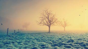 Фото бесплатно заморозки, туман, трава