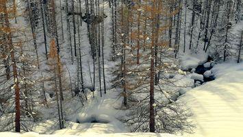 Заставки зима,лес,снег,речка,сугробы,деревья,природа