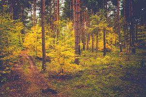 Фото бесплатно осень, лес, деревья, природа, пейзаж