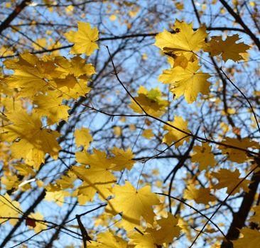 Красивые обои листья, осень
