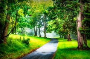Фото бесплатно дорога, природа, лето